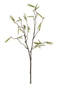 Birkenzweig 53cm grün