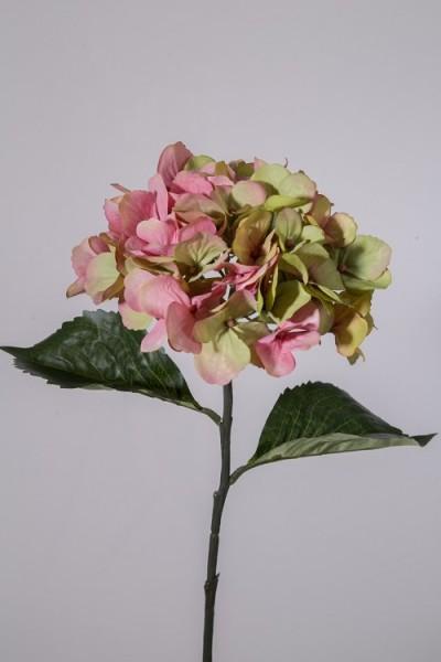 Hortensie einzeln rosè/grün 61 cm