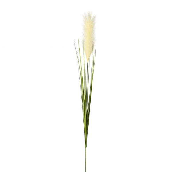 Pampasgras , 106 cm, creme