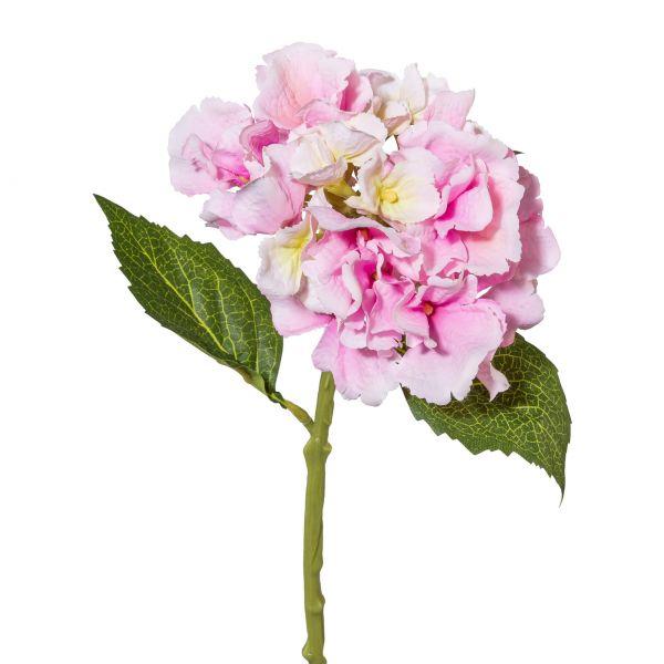 Minihortensie, 33 cm, rosa
