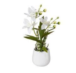 Japanorchidee im Keramiktopf 32cm,weiß
