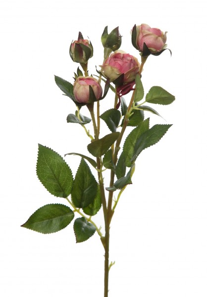 Mini Cabbage Rose Spray w/3 flrs 2 buds 44cm