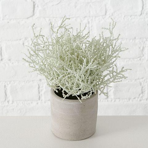 Topfpflanze Antikus, Gras, Indoor, H 20 cm, Kunststoff Kunststoff grau