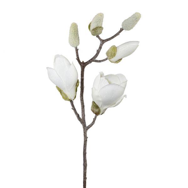 Magnolienzweig geeist